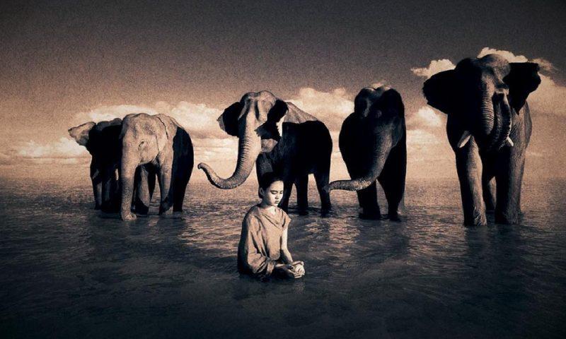 стадо слонов и девочка, место силы